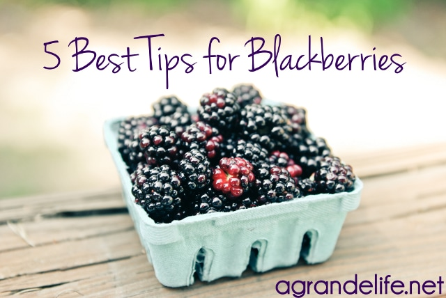 5 best tips for blackberries