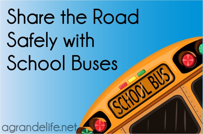 share the road safely with school buses