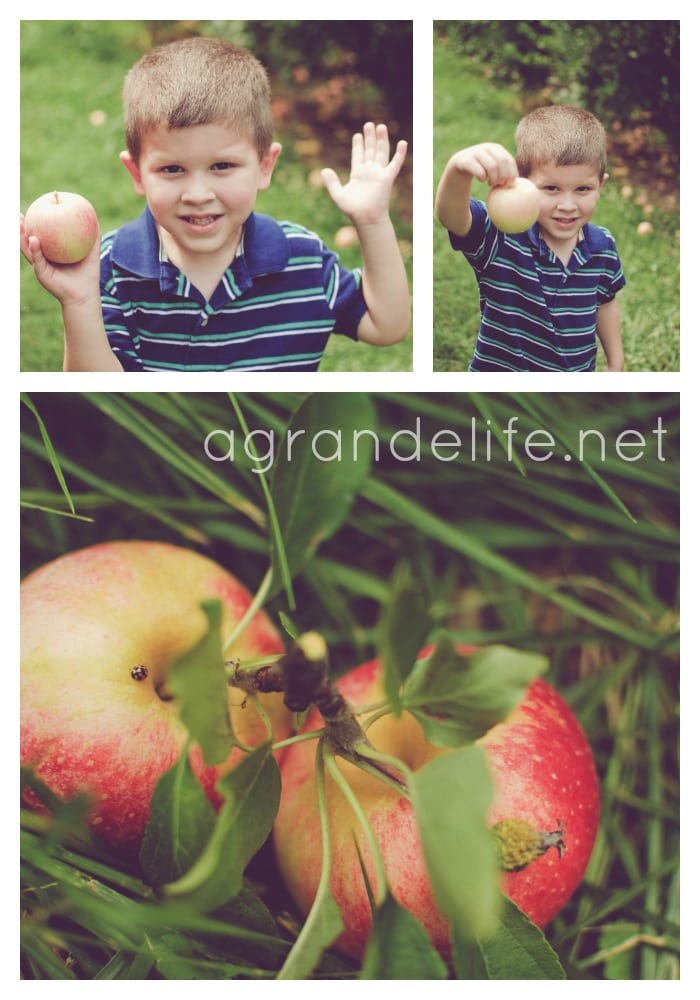 picking apples at highland orchards
