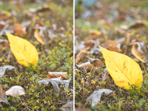 fall photographs