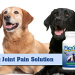 dog-joint-pain-solution
