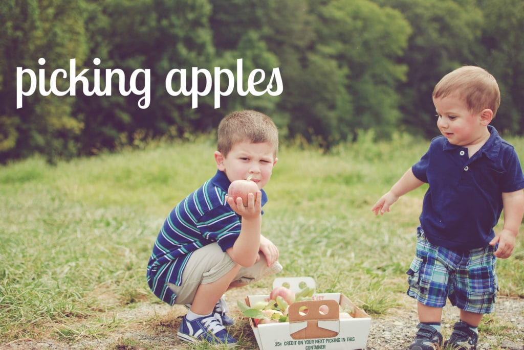 picking apples at a local orchard