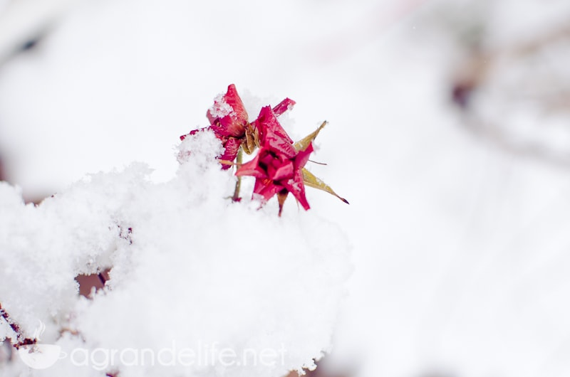 photographing snow-1