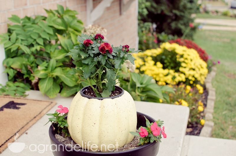 pumpkin flower holder-1