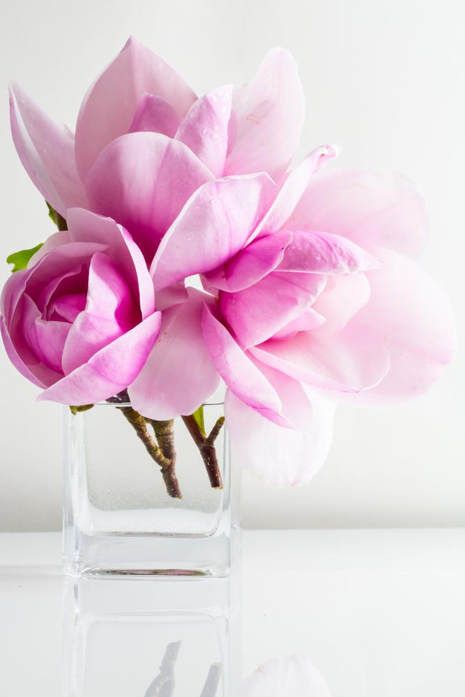 agrandelifenet-magnolia_bouquet-5731c62cbced7