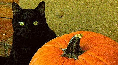 28 Cat Pumpkin Stencils for the Ultimate Halloween Jack-o-lantern