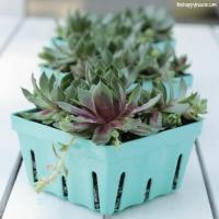 Berry Basket Succulent Planters