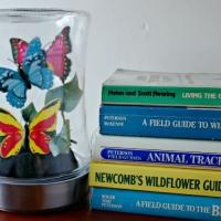 DIY Glass Cloche Crafts